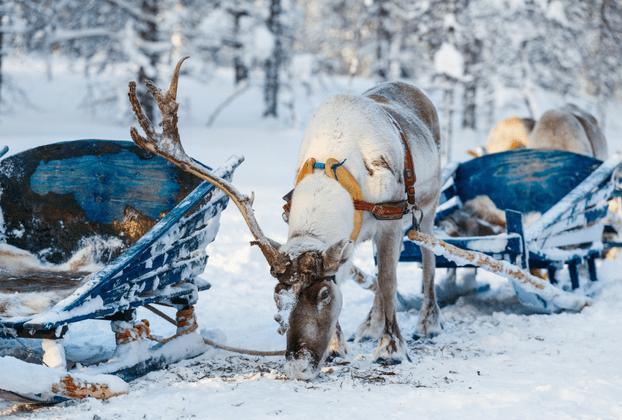 31 Hygge Day Christmas Photo Challenge