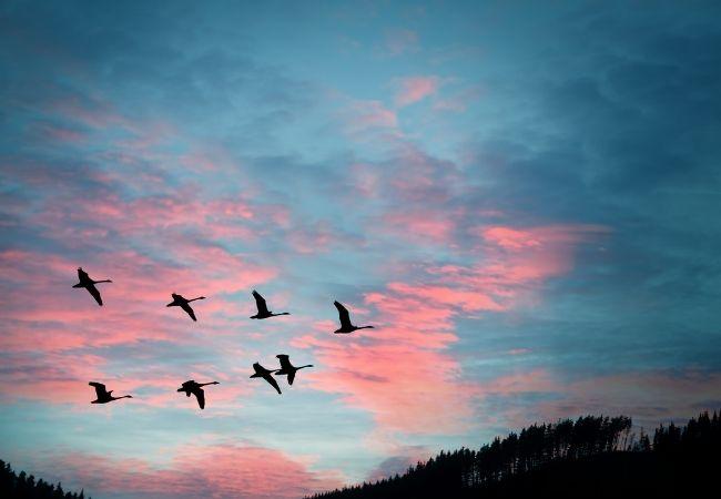 Birds flying in a morning sky