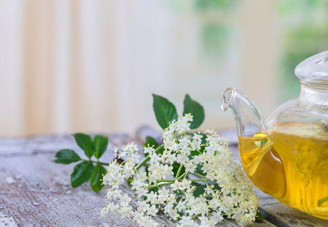 Elderberry flower garden tea