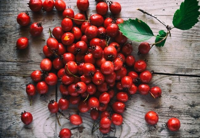 Hawthorne berries on rustic boards