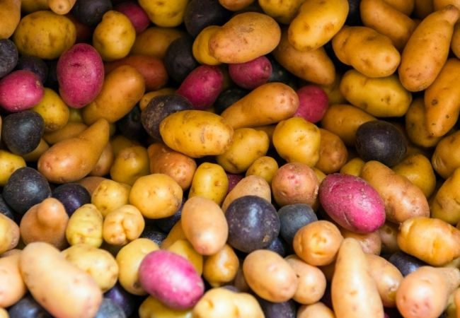 Whole yellow, red, and purple potatoes in a pile